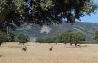 Periodistas y blogueros especializados en el turismo de naturaleza conocen la oferta de turismo de camping de Castilla-La Mancha