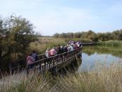 411 personas mayores disfrutan de los parajes naturales de Las Tablas, Las Barrancas y Zorita con el programa 'Rutas Senderistas'