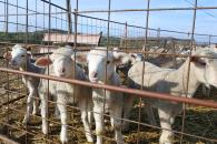 Castilla-La Mancha es declarada oficialmente región indemne a la brucelosis ovina y caprina