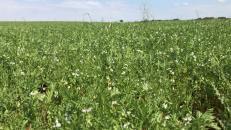 El Gobierno de Castilla-La Mancha ha abonado este año más de 3,3 millones de euros de ayudas para cerca de medio millar de agricultores en zona ZEPA