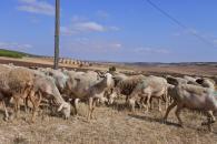 Castilla-La Mancha ingresa mañana en las cuentas de 14.000 agricultores y ganaderos cerca de 20 millones de euros de ayudas de la PAC