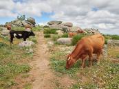 Más de 18,6 millones de euros llegan hoy a las cuentas de agricultores y ganaderos profesionales en zonas de montaña o con limitaciones naturales