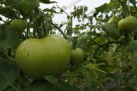 El DOCM publica hoy el decreto que regula la venta directa para productos agroalimentarios o transformados de agricultores y ganaderos