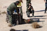 Primer lince ibérico en seguimiento en la provincia de Albacete