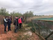 El Gobierno de Castilla-La Mancha continua los trabajos de recuperación de la cerceta pardilla en la región con la suelta 20 ejemplares en el complejo Lagunar de Alcázar de San Juan