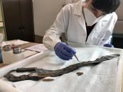 El Gobierno regional restaura una de las piezas más importantes del Museo de Ciudad Real, la espada íbera procedente de Alarcos