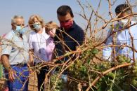 Visita viñedos dañados por las tormentas, en Campo de Criptana