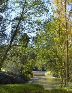 ZEC Sotos del río Alberche
