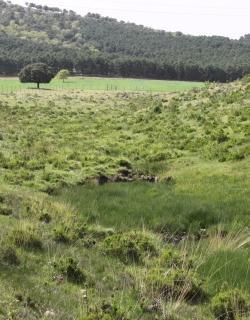 ZEC Bonales de la comarca de los Montes del Guadiana