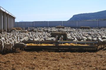 Ayudas campañas de la PAC en Albacete y subvenciones vacuno de cebo y arroz