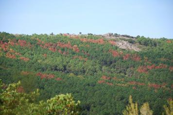 Sanidad forestal