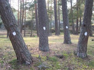 Red de seguimiento de danos forestales