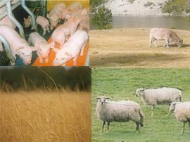 Cifras del Sector Agrario y Ganadero