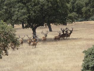La caza en Castilla-La Mancha