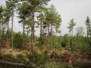 Certificación forestal en Cuenca