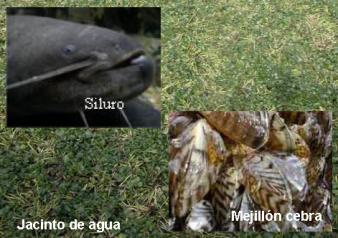 Especies exoticas invasoras