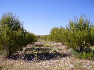 Forestación de tierras agrícolas