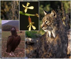 Planes de Recuperación de especies amenazadas