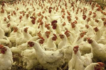Autorización Ambiental Integrada para las grandes explotaciones avícolas y porcinas