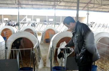 El Gobierno de Castilla-La Mancha abona hoy más de 7,2 millones de euros de ayudas de la PAC, principalmente para vacuno