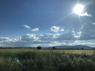 Castilla-La Mancha abona este viernes más de cinco millones de ayudas de la PAC correspondientes al pago básico, pago verde y de jóvenes agricultores