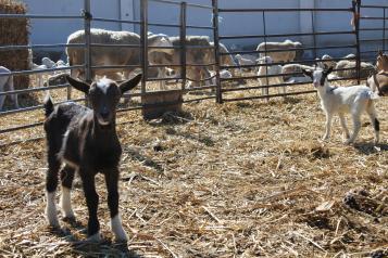 El Gobierno de Castilla-La Mancha abona este viernes otros 11,5 millones de euros más de ayudas asociadas de la PAC a agricultores y ganaderos