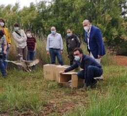 El Gobierno de Castilla-La Mancha reintroduce la especie 'cerceta pardilla' en la Reserva natural del Complejo Lagunar de Alcázar de San Juan para favorecer su presencia en la región