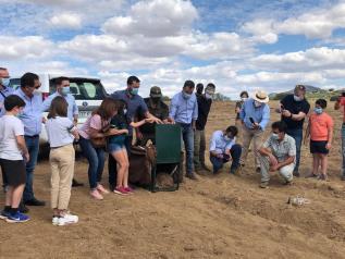El Gobierno de Castilla-La Mancha finaliza la campaña de refuerzo de poblaciones de lince ibérico en la región liberando al medio natural el décimo ejemplar en los Montes de Toledo