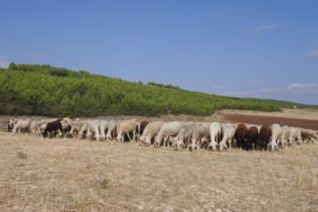 Más de 3.000 agricultores y ganaderos profesionales reciben 3,9 millones de euros de ayudas en Ciudad Real