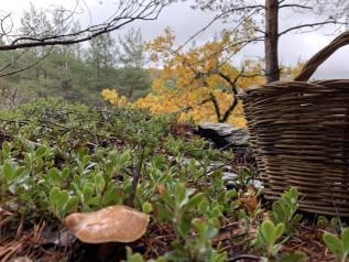 El Gobierno de Castilla-La Mancha aboga por una recogida de setas sostenible y destaca su potencial socioeconómico en el ámbito rural
