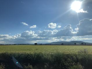 Castilla-La Mancha amplía el plazo de presentación de la solicitud única de la PAC hasta el 31 de mayo
