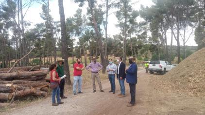 El Gobierno regional destaca la progresiva recuperación de los montes públicos de Toledo tras la inversión de 340.000 euros para paliar los desperfectos causados por Filomena