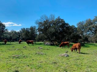 Castilla-La Mancha ha abonado este año 57 millones de euros a la agricultura ecológica, ayudando a quienes se esfuerzan por conservar el entorno