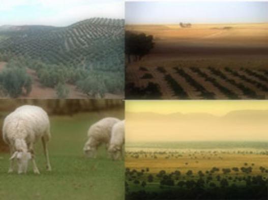 cifras sector agrario