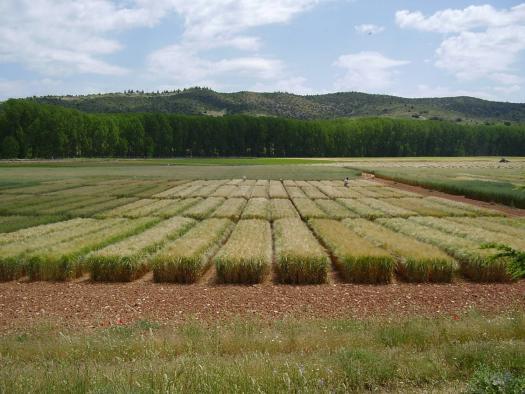 Experimentación Agraria