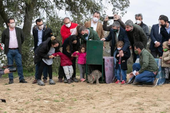 Suelta de linces ibéricos en el Refugio de Fauna El Borril