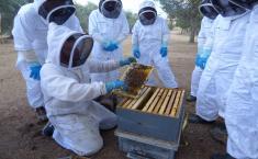 Cerca de una veintena de bomberos participan en un curso de intervención apícola para formarse en la retirada de enjambres de abejas en el entorno urbano